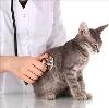 Ветеринарные клиники в Зарайске